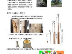 基礎知識資料樹木調査用語など